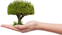 plant-tree-carbon-offset